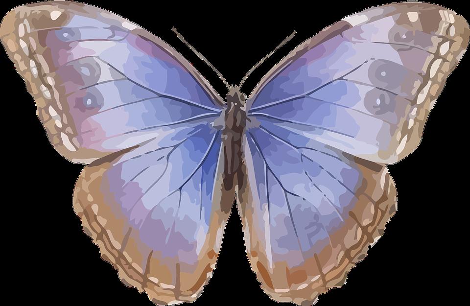 Dyr, Sommerfugl, Insekt, Natur