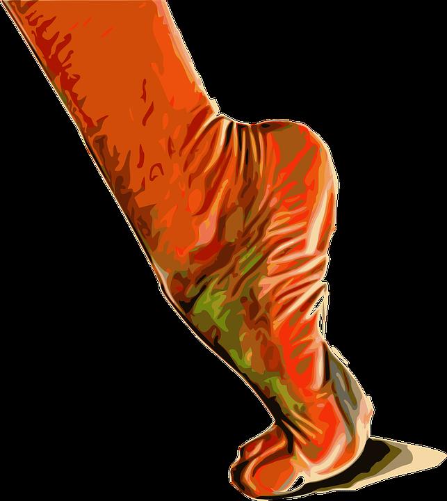 Fuß Muskeln · Kostenlose Vektorgrafik auf Pixabay