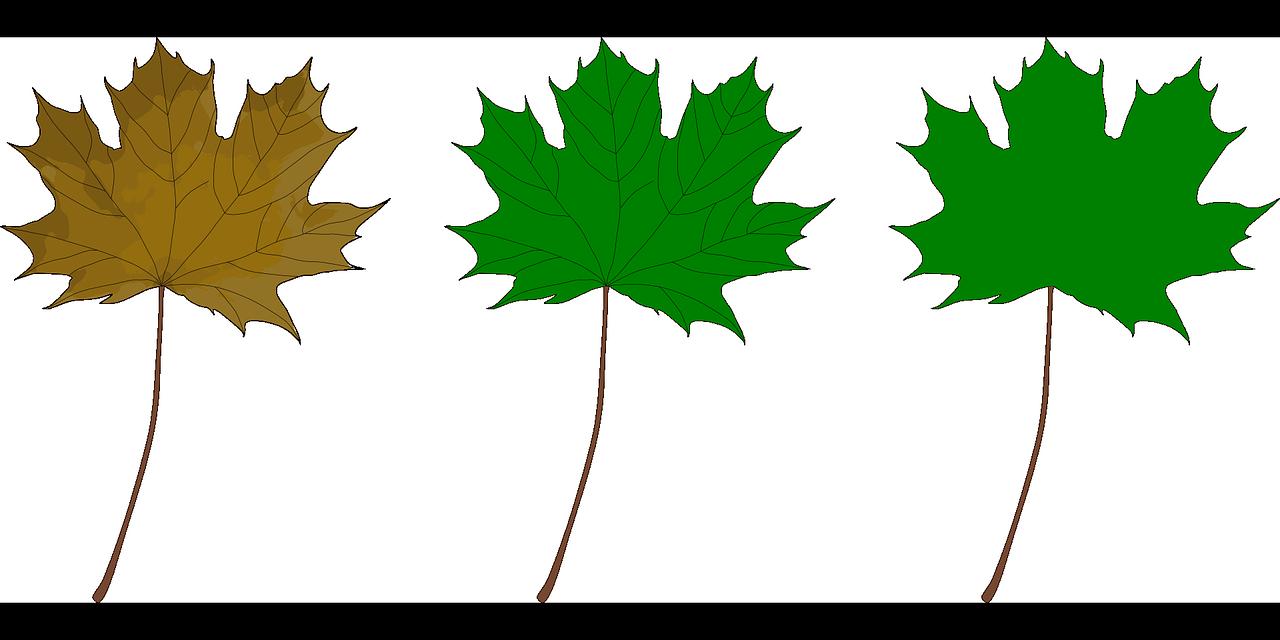 приносит зеленые листья картинки для оформления распечатать и вырезать мне адрес
