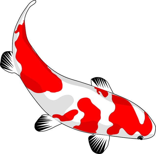 fish koi red free vector graphic on pixabay rh pixabay com koi fish vector free japanese koi fish vector