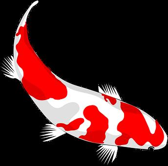 Ikan Koi Gambar Pixabay Unduh Gambar Gambar Gratis