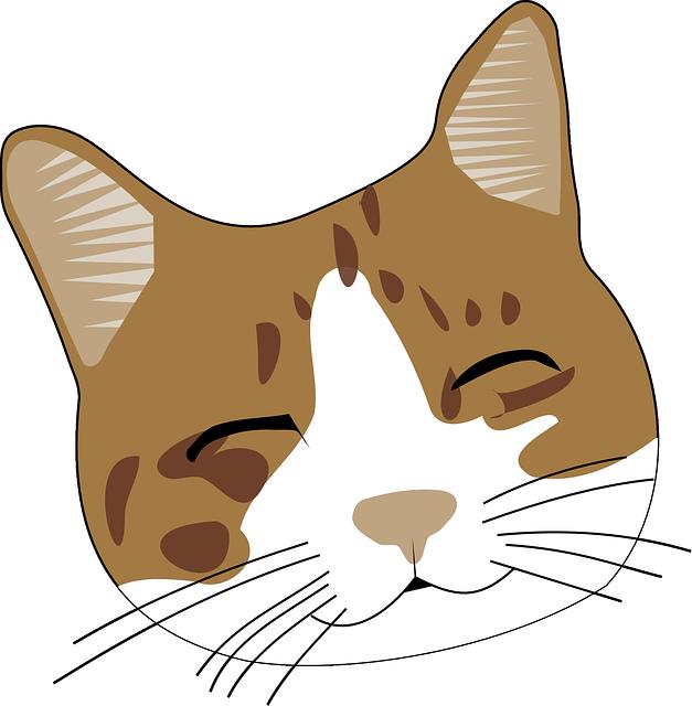 gato rosto bonito gráfico vetorial grátis no pixabay