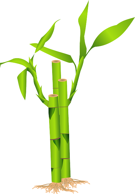Bamboo Grass Japan 183 Free Vector Graphic On Pixabay