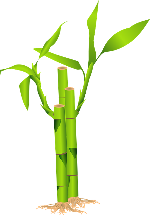 Cartoon Bamboo Stick ~ Bamboo grass japan · free vector graphic on pixabay