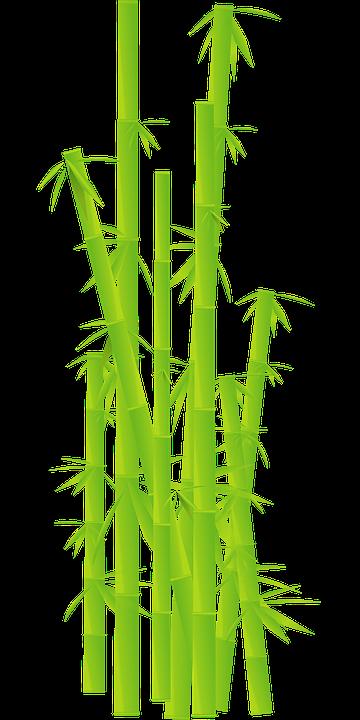 Bambus Gras Dschungel Kostenlose Vektorgrafik Auf Pixabay
