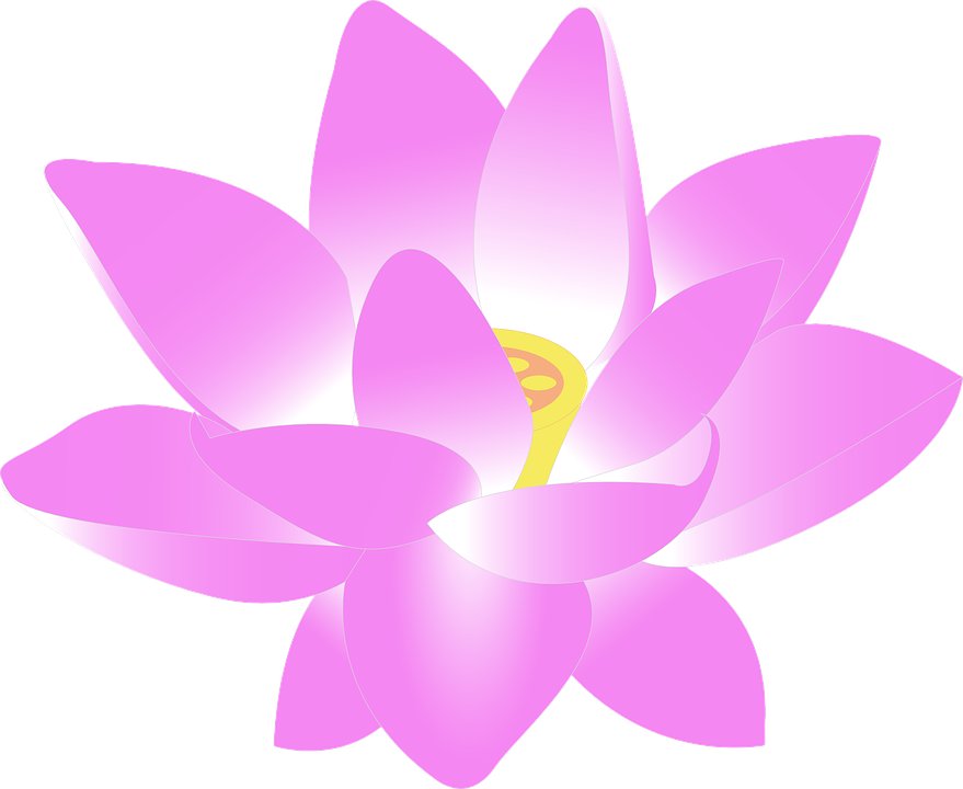 Flower Water Lily Free Vector Graphic On Pixabay
