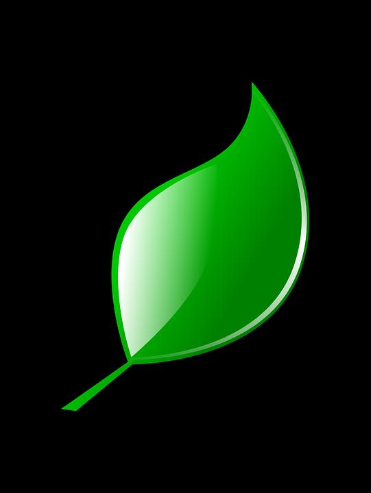 Vector gratis de la hoja verde naturaleza imagen - Color verde hoja ...