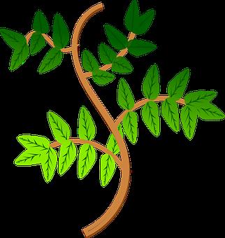 Leaves, Branch, Leaf, Green, Plant