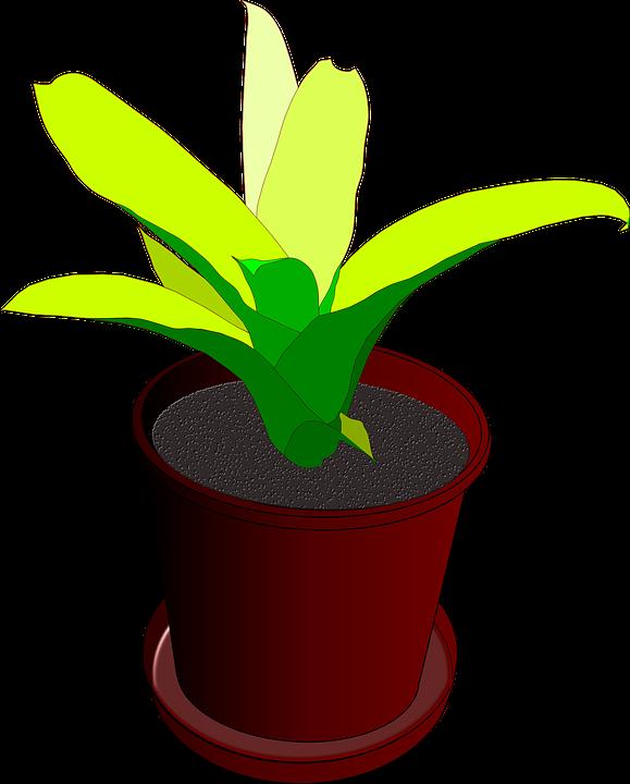 Plantes Pot De Fleur Cache Images Vectorielles Gratuites Sur Pixabay