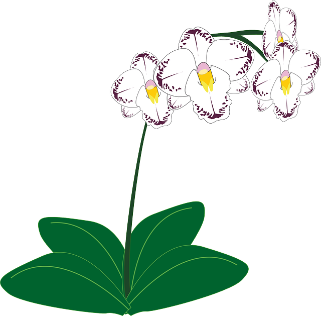 Orchid Flower 183 Free Vector Graphic On Pixabay
