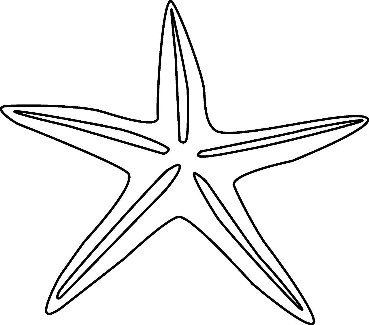 Морская звезда раскраска фото