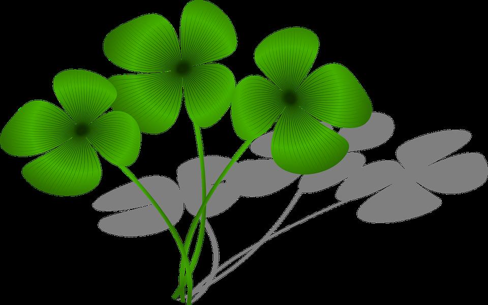 kostenlose vektorgrafik klee gl ck flora gr n pflanze kostenloses bild auf pixabay 161400. Black Bedroom Furniture Sets. Home Design Ideas