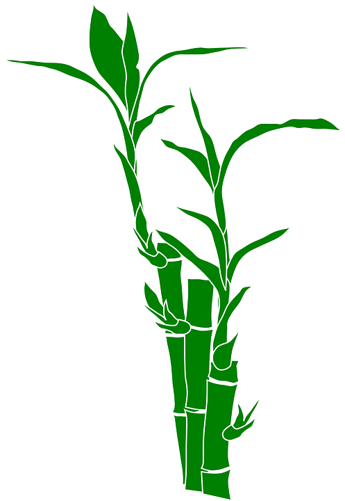 Bambus Pflanze Natur Kostenlose Vektorgrafik Auf Pixabay