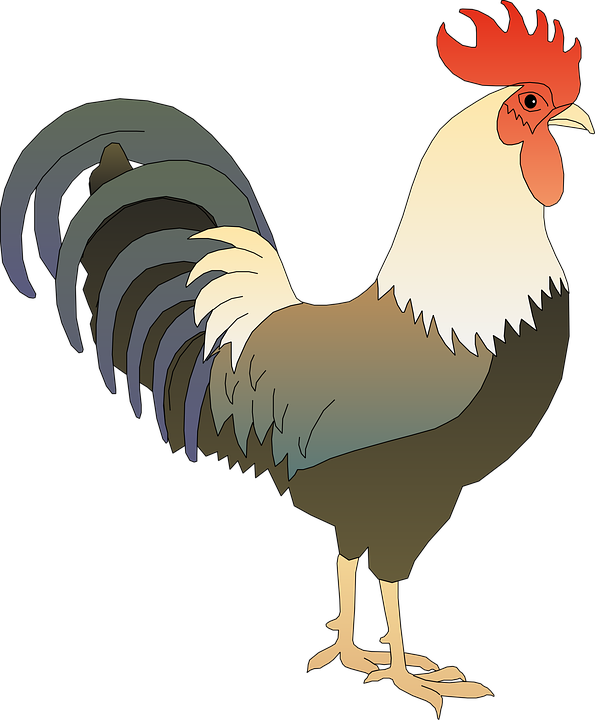 rooster cock tap free vector graphic on pixabay rooster cock tap free vector graphic