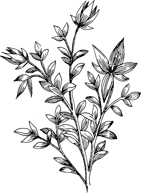 flower biology plant 183 free vector graphic on pixabay