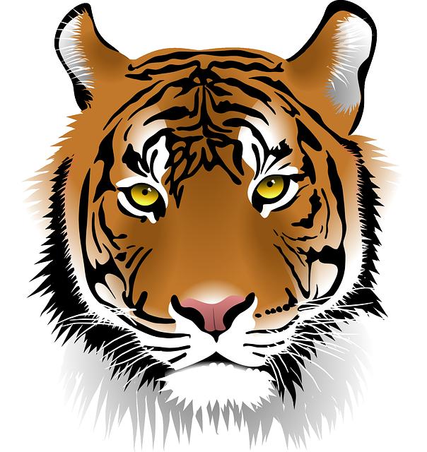Free vector graphic tiger sumatran tiger wildlife - Images tigres gratuites ...