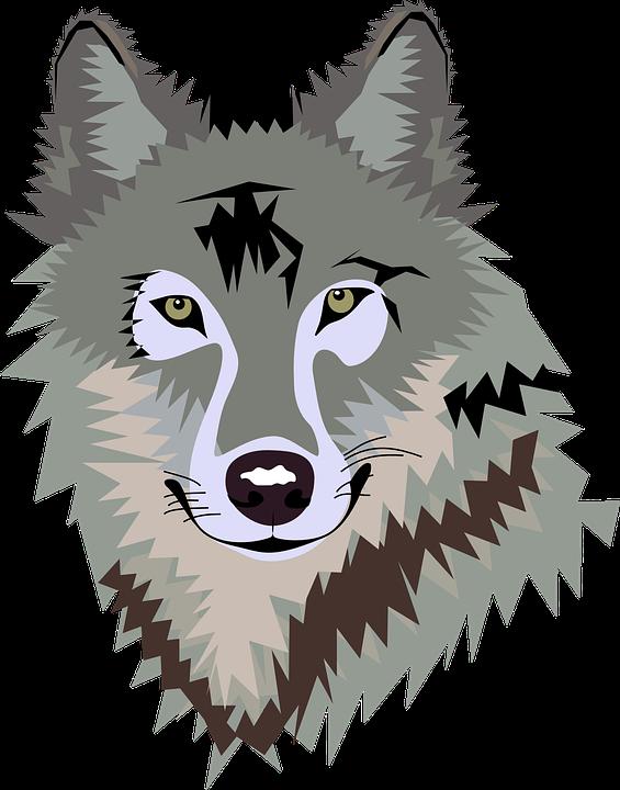 Grauer Wolf Bilder · Pixabay · Kostenlose Bilder herunterladen