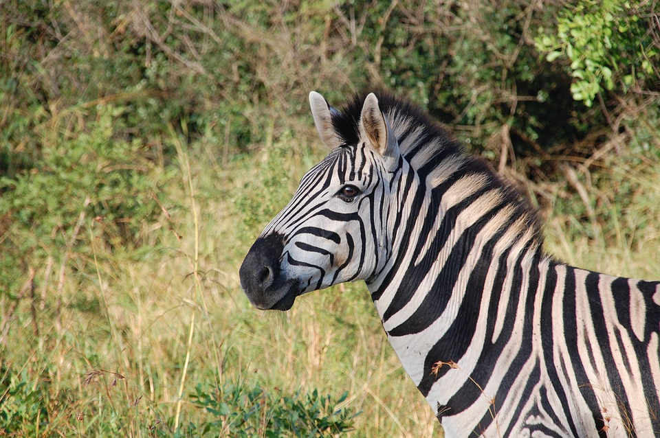 Free Photo South Africa Wild Nature Free Image On