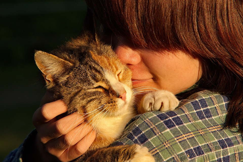 Kat, Pessoas, Rosto, Pessoa, Animais, Gatos
