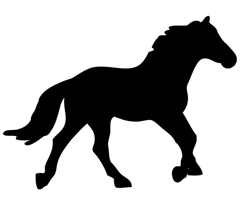 Pferd Pferde Tier Kostenloses Bild Auf Pixabay