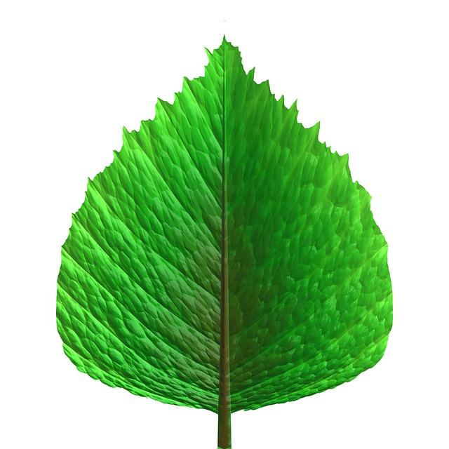 Green Leaf Leaves · Free Image On Pixabay