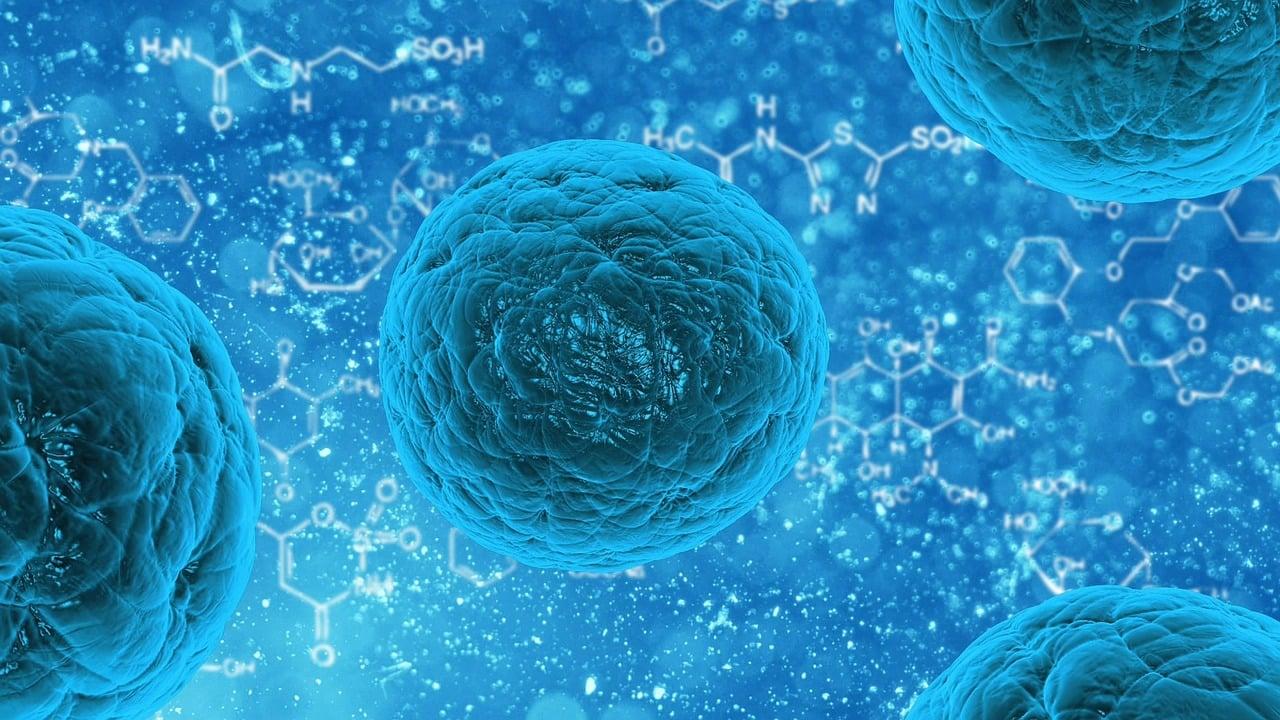 Humane Papillomaviren sind kugelförmige DNA-Viren.