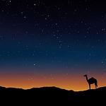 camel, oman, egypt