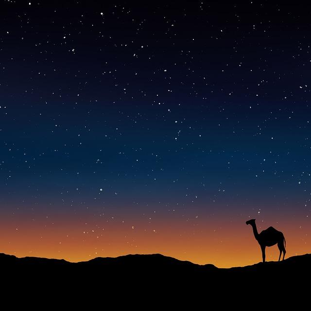 Camel Oman Egypt 183 Free Image On Pixabay