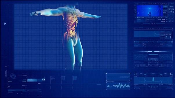 Human Digestive System Human Internal Orga