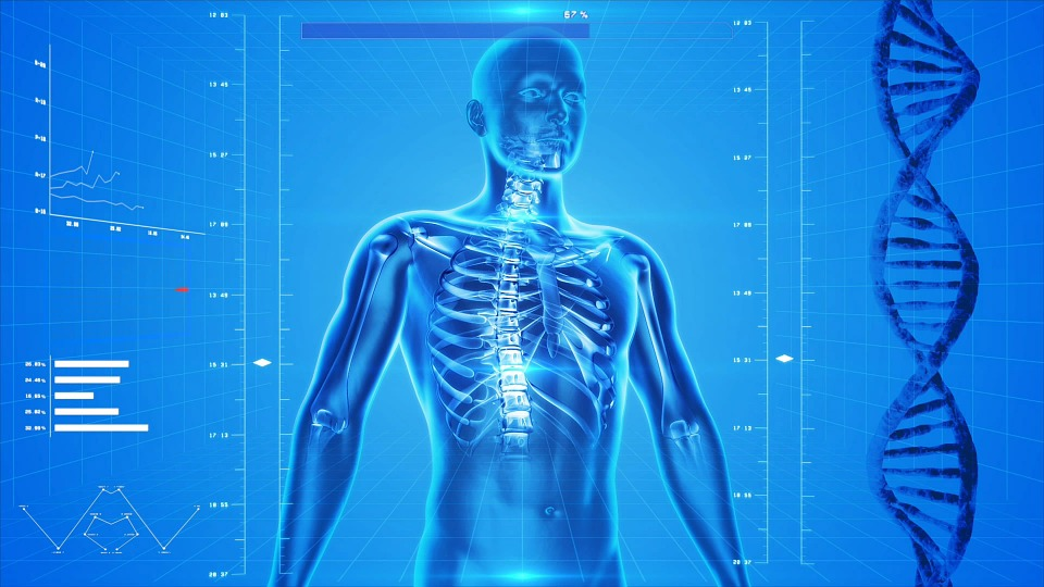 Human Skeleton Body Anatomy Free Image On Pixabay