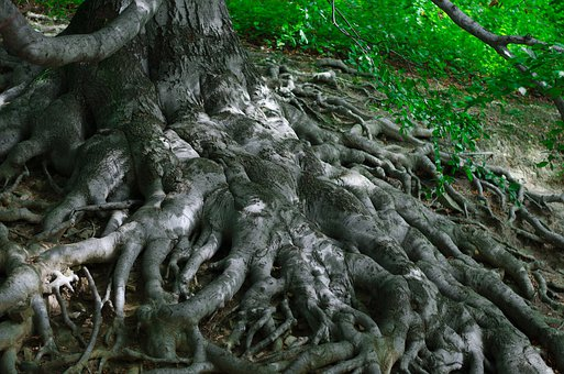 Roots, Tree, Nature, Woods, Forest