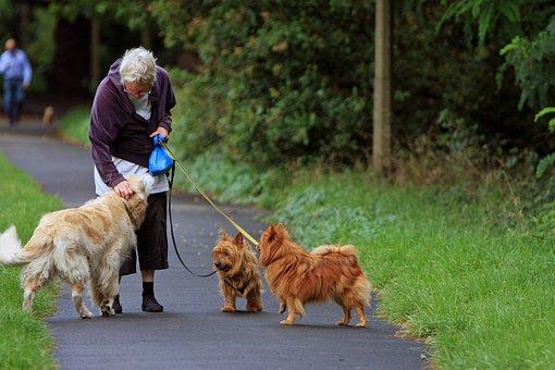 Australian Terrier, Terrier, Spitz