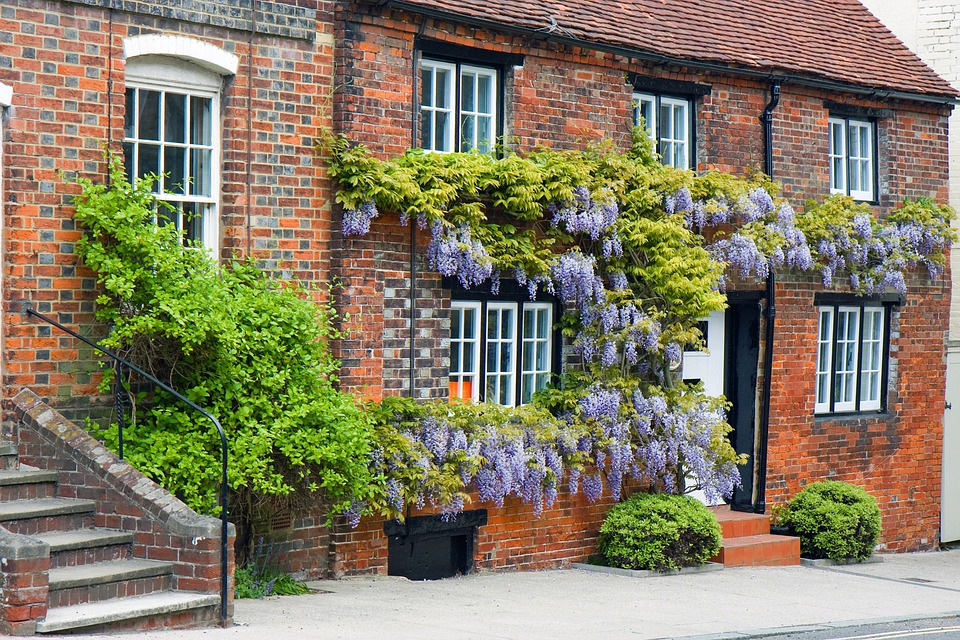 Wisteria, House, Covered, Growing, Flowers, Plant