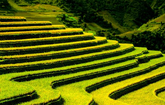 Terraced Fields, Pattern, Agriculture