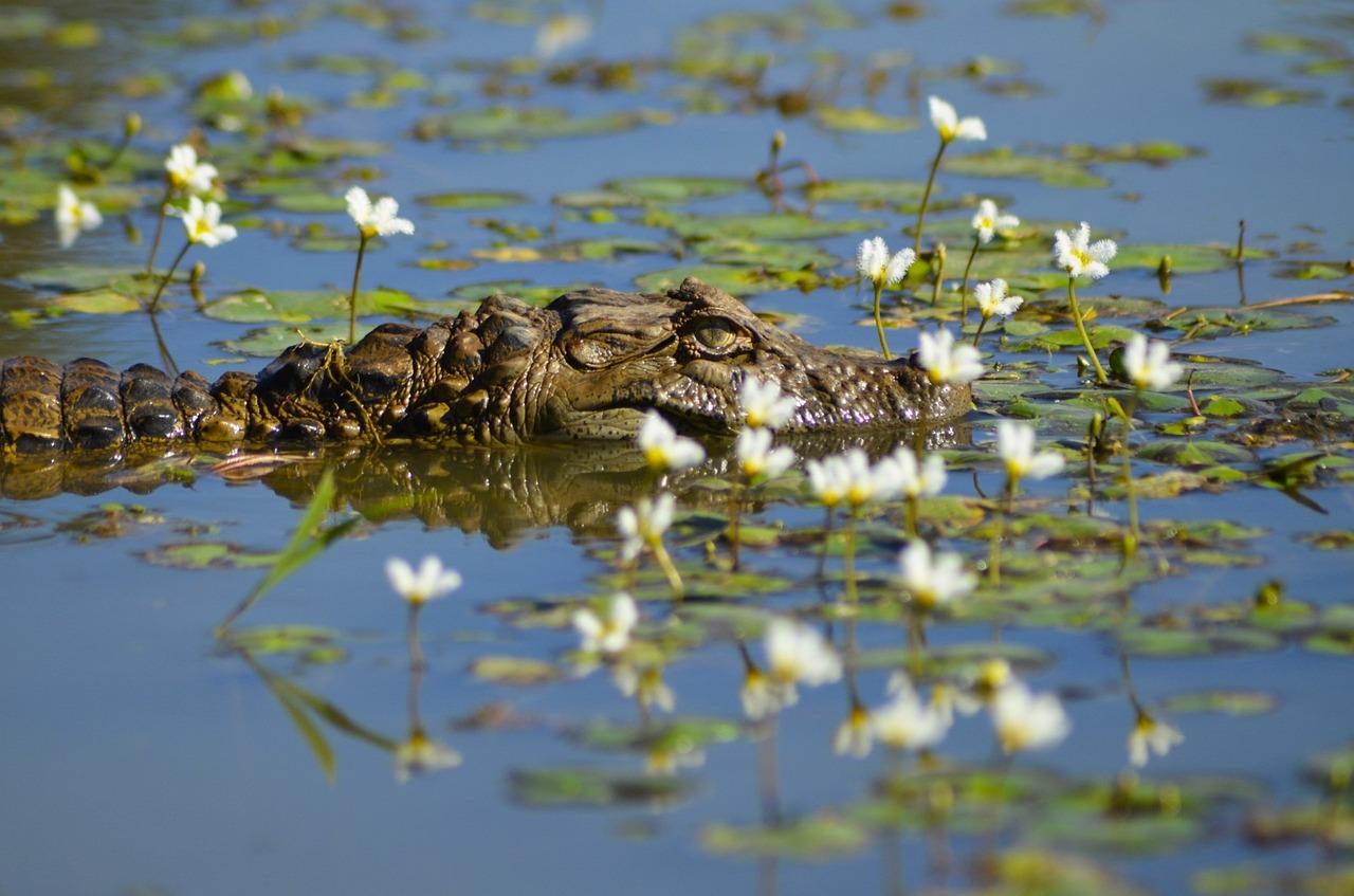 обоями фото животных водоемов фэнтези, люблю
