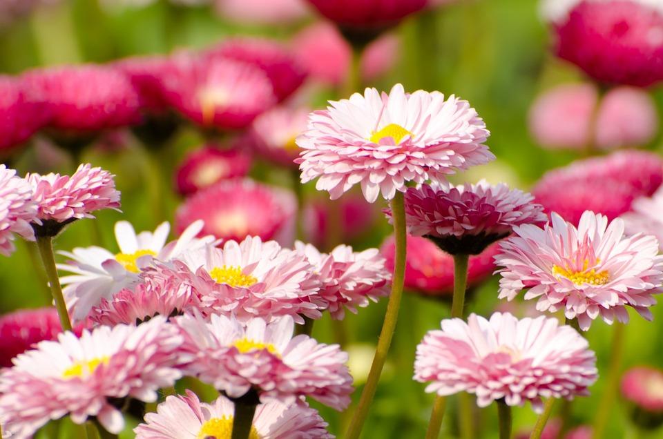 photo gratuite fleur t printemps jardinage image gratuite sur pixabay 164452. Black Bedroom Furniture Sets. Home Design Ideas