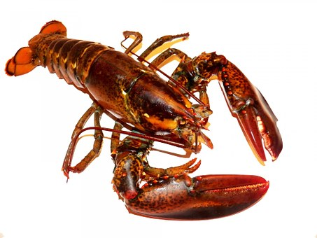 Lobster Lobsters Live Food Meal Meals Meal