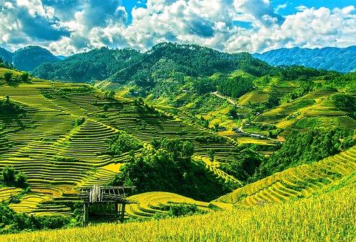 Rice Terraces, Rice Fields, Mu Cang Chai