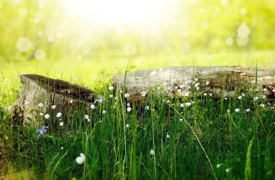 花, 牧草地, 木材, 森林, 太陽, 夏, 休暇, ピクニック, 光, 線