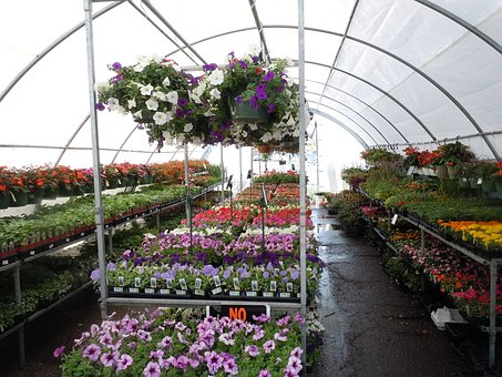 Flowers, Greenhouse, Colorful, Flora