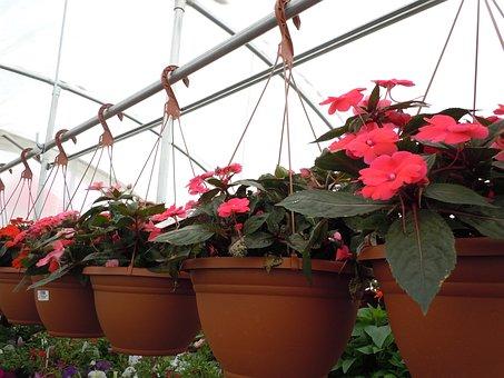 Flowers, Basket, Hanging, Floral