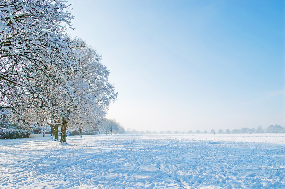 Free Photo: Nice, Winter, Day, Tree, Trees