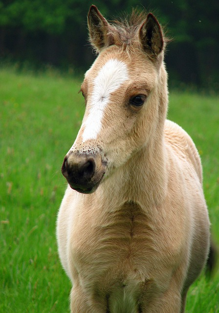 Free photo foal horse pony baby horse free image on - Image de chevaux gratuit ...