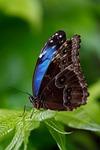 animal, butterfly, beautiful