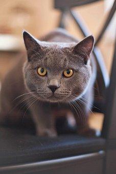 Katze, Kätzchen, Katzen, Grau, Gelb