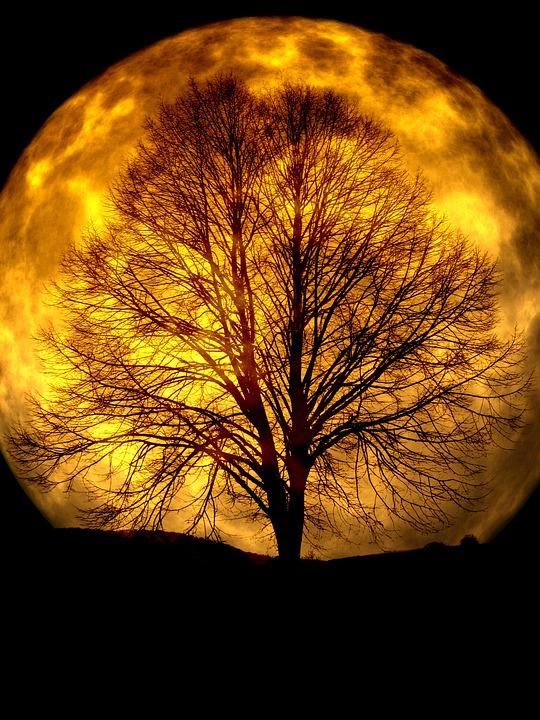 Free illustration Moon Tree Kahl Silhouette Free Image on