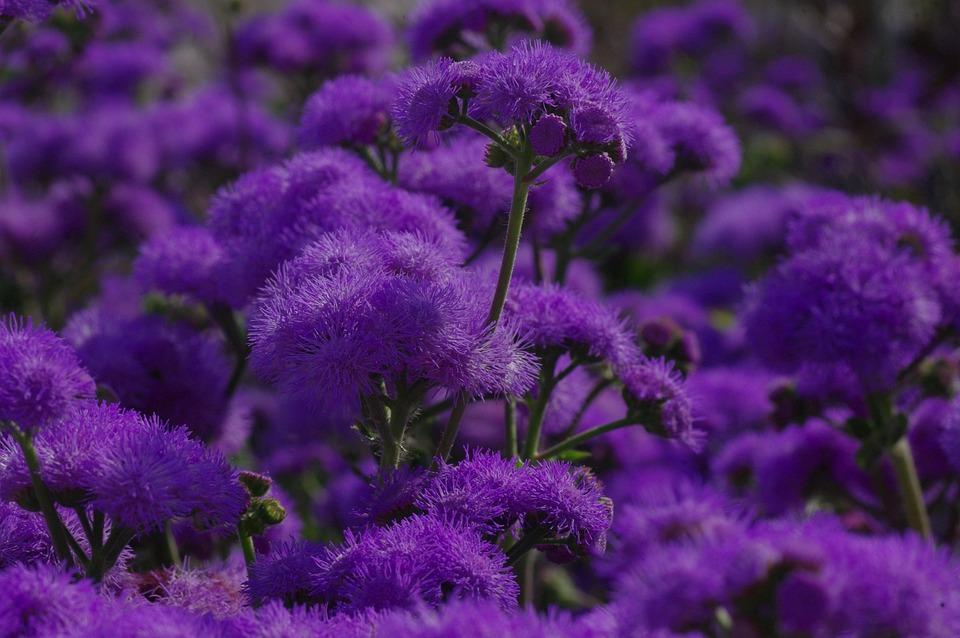 violet  free images on pixabay, Beautiful flower