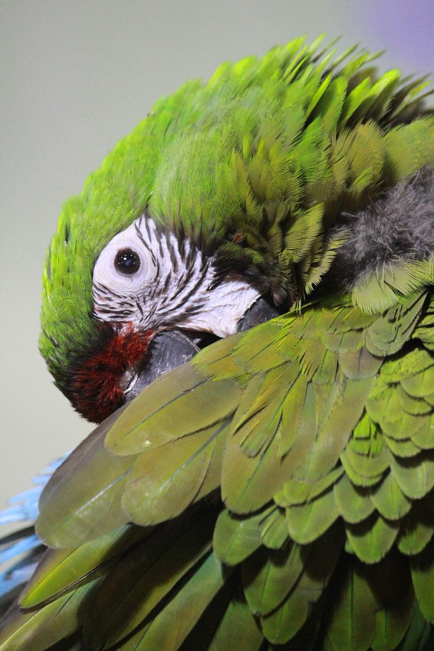 Букет зеленый попугай, цветы оптом купить
