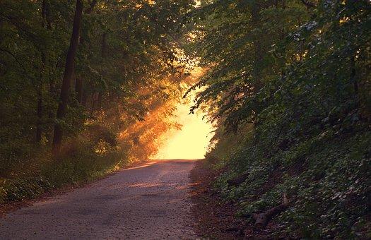 森林, パス, 日没, 日光, 方法, 夕暮れ, 木, 林, 葉, 植物, 田舎
