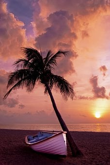 Palm Tree, Palm, Ocean, Summer, Vacation